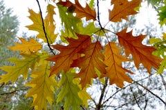 Bosquejos del otoño Imágenes de archivo libres de regalías