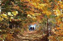 Bosquejos del otoño al subir en las montañas Fotos de archivo