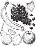Bosquejos del relevo de la fruta Foto de archivo