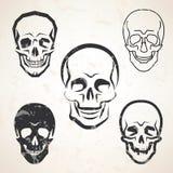 Bosquejos del vector del cráneo fijados Imagen de archivo libre de regalías