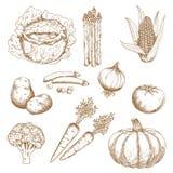 Bosquejos dibujados mano de verduras Foto de archivo libre de regalías