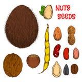 Bosquejos nutritivos sanos de las nueces, de las habas y de las semillas Foto de archivo libre de regalías