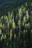 Bosques fotografía de archivo libre de regalías