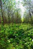 Bosques Imagen de archivo libre de regalías