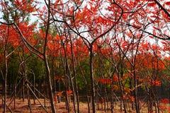 Bosques fotografía de archivo