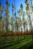 Bosques fotos de archivo libres de regalías