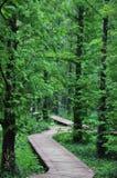 bosques Imagen de archivo