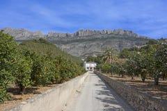 Bosques das laranjas na Espanha do sul imagens de stock