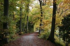 Bosques de la haya en otoño fotos de archivo