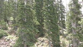 Bosques de la montaña en Arizona, sudoeste los E.E.U.U. almacen de video