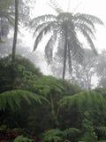 Bosques de la nube con muchos helechos Cyanthales Fotos de archivo libres de regalías
