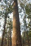 Bosques de la teca Imagenes de archivo