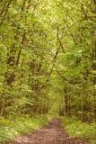 Bosques del europeo del verano del paisaje Imágenes de archivo libres de regalías