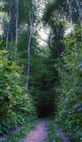 Bosques del europeo del verano del paisaje Fotografía de archivo