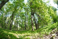 Bosques del europeo del verano del paisaje Foto de archivo