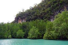 Bosques del mangle fotografía de archivo