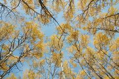 Bosques del otoño Foto de archivo libre de regalías