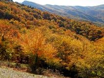 Bosques del otoño de Crimea Fotografía de archivo