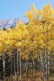 Bosques del otoño en rockies Imagenes de archivo