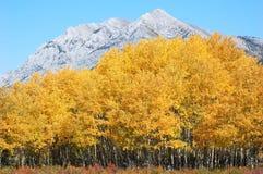 Bosques del otoño en rockies Fotografía de archivo libre de regalías