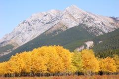Bosques del otoño en rockies Fotos de archivo libres de regalías