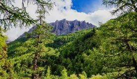 Bosques del árbol de pino en la base de Jade Dragon Snow Mountain Imagenes de archivo
