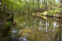 Bosques del terreno de aluvión Fotografía de archivo