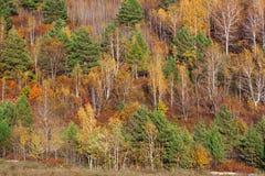 Bosques en la frontera de China y de Rusia Imagen de archivo libre de regalías