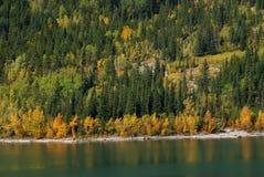 Bosques en la orilla del lago fotos de archivo libres de regalías