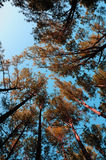 Bosques extendidos Fotografía de archivo