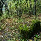 Bosques tropicales, musgo en raíces del árbol Imagen de archivo libre de regalías