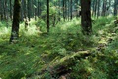 Bosques tropicales, musgo en raíces del árbol Fotos de archivo libres de regalías