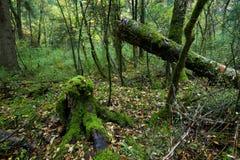 Bosques tropicales, musgo en raíces del árbol Foto de archivo
