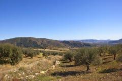 Bosques verde-oliva das montanhas andaluzas Foto de Stock Royalty Free