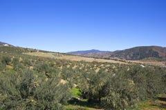 Bosques verde-oliva e montanhas andaluzes Fotografia de Stock