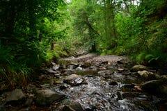 Bosques y cascadas, cascada de Escocia del agua que cae de las rocas fotos de archivo