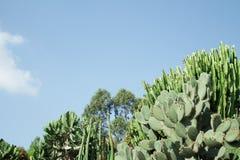 Bosquet de différentes espèces de cactus Image stock