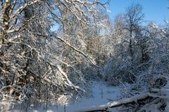 Bosquet de forêt Photographie stock libre de droits