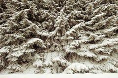 Bosquet de forêt images libres de droits