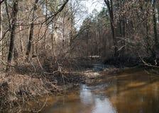 Bosquet de forêt image libre de droits