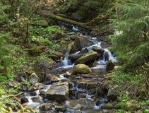 Bosquet de forêt avec une petite rivière de montagne image stock
