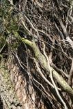 Bosquet de grimpeur Photo libre de droits