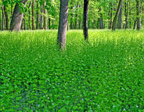 Bosquet de la forêt Photos stock