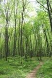 Bosquet vert-foncé de forêt Photographie stock libre de droits