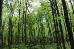 Bosquet vert-foncé de forêt Photo stock