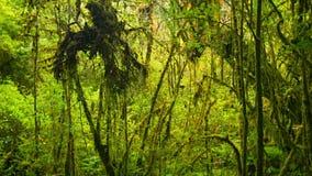 Bosquets de forêt tropicale tropicale banque de vidéos