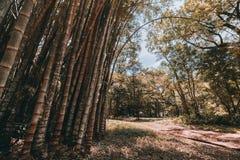 Bosquets en bambou dans le jardin botanique photographie stock