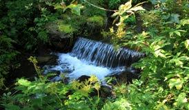Bosquets frais autour de cascade sur la crique de montagne au printemps Photographie stock