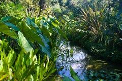 Bosquets verts au-dessus de l'étang, ischions, Italie Photos stock