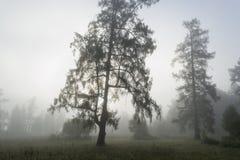 Bosrand in de vroege mistige ochtend Royalty-vrije Stock Afbeelding